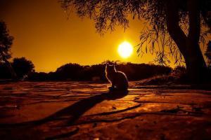 Licht und Schatten! Schlagfertigkeit bedeutet auch zu wissen, dass jedes Wort positiv oder negativ sein kann. Auf die Deutung kommt es an.
